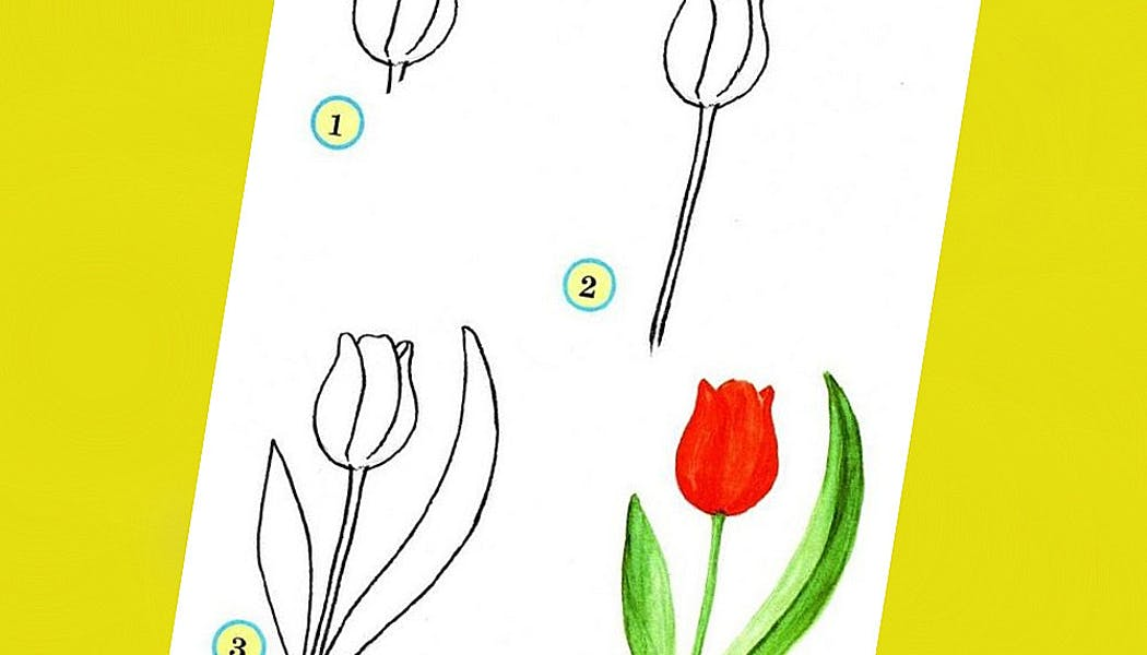 fiche pour apprendre à dessiner une tulipe