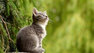 1,2,3, mon ami le chat