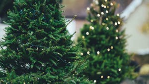 Acrostiches de Noël : le sapin