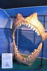 Image Aquarium du Grand Lyon