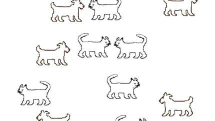 Autant de chiens que de chats: exercice