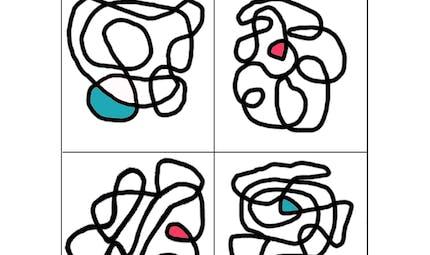 Bicolore