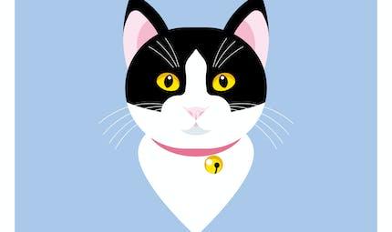 Chat perché et autres jeux de chat