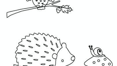 coloriage hibou herisson escargot