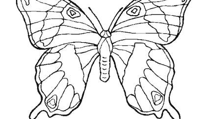 Coloriage grand papillon