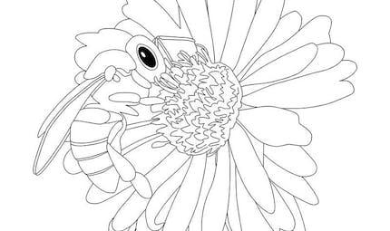 Coloriage Pollen 13