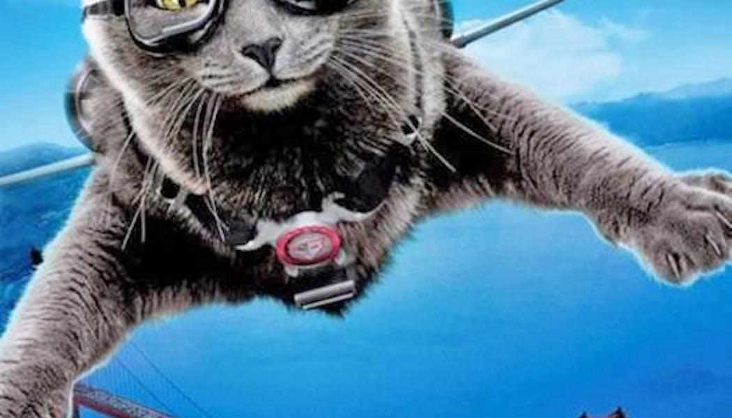 Comme chien et chat : la revanche de Kitty       Galore