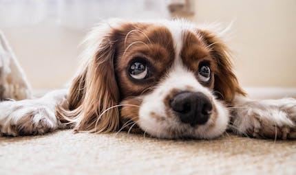 Comment bien s'occuper de son chien ?