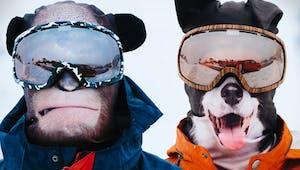 Des animaux qui skient pour de vrai sur les pistes ?