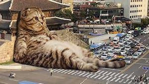 Des chats géants dans la rue
