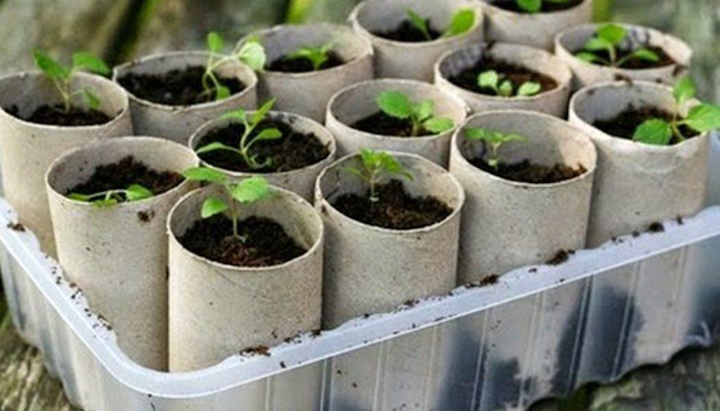 Des plantations avec des rouleaux de carton