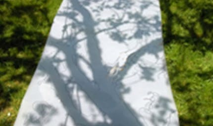 Dessiner avec les ombres des arbres