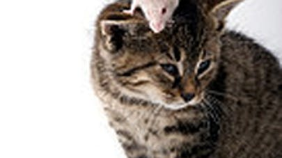 chat souris