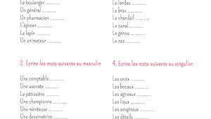 Exercice de grammaire : Les genres et les pluriels