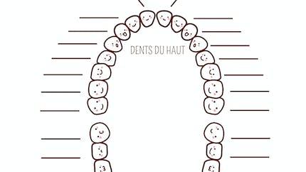 Exercice : la denture définitive