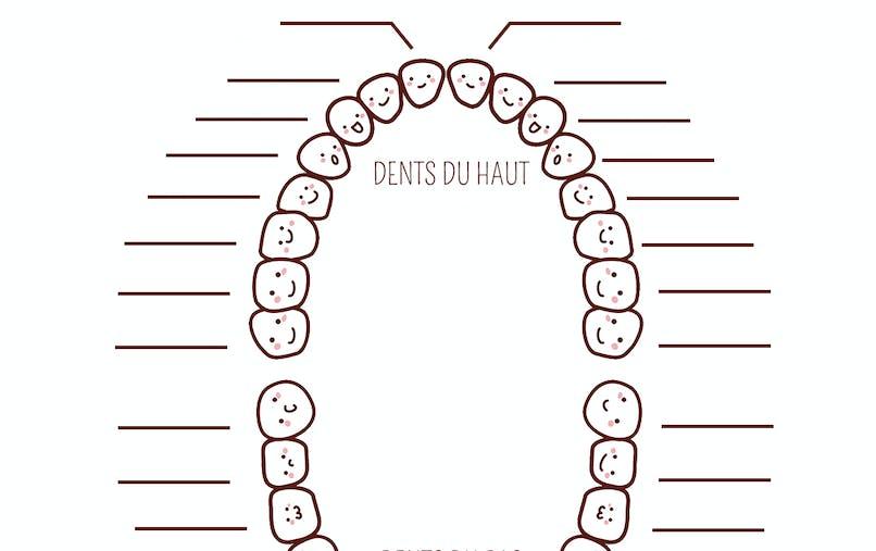 Exercice sur la denture définitive