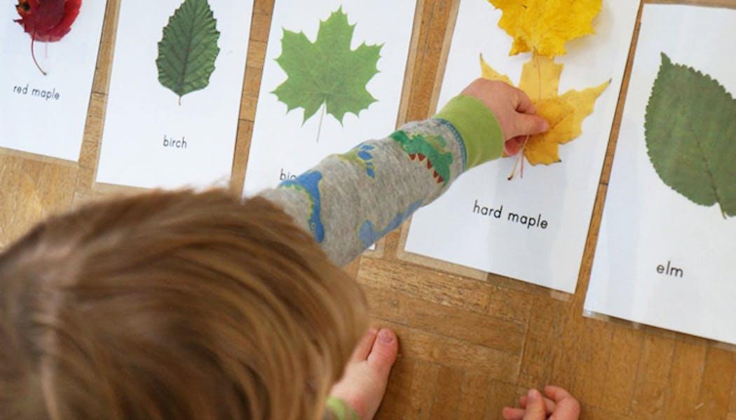 Fabriquer des cartes pour reconnaitre les différentes         feuilles d'arbres