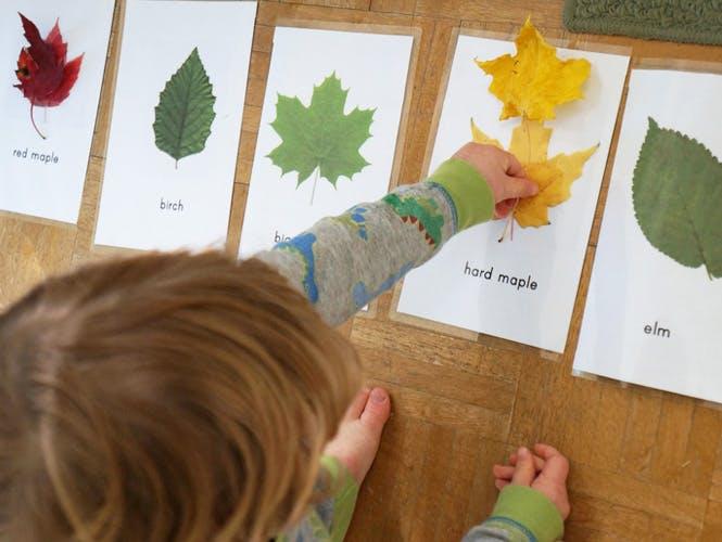 des cartes pour reconnaitre les différentes feuilles d'arbres