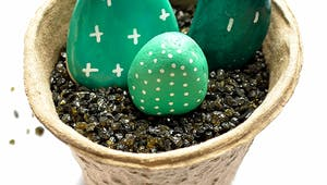 Des galets-cactus en pots