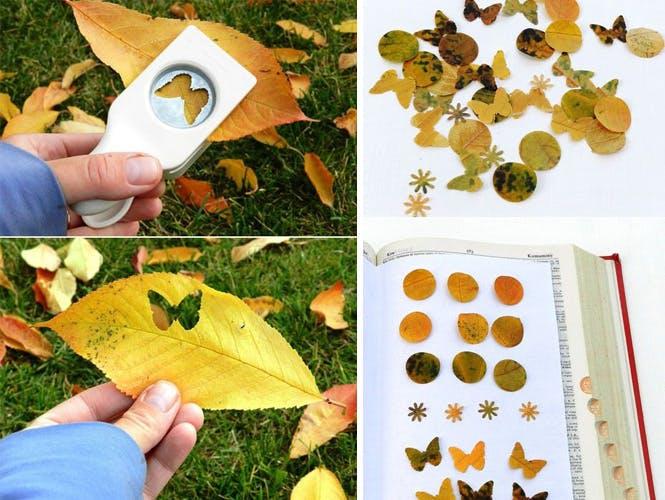 Faire des confettis en feuilles d'arbres