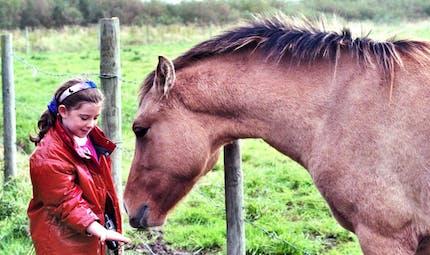 Je découvre le cheval