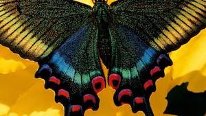 Je découvre le papillon