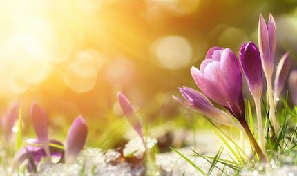 Je découvre : le printemps