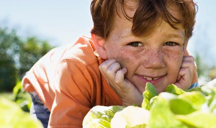 Je découvre : les légumes du potager