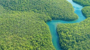 L'Amazonie: destruction et disparition