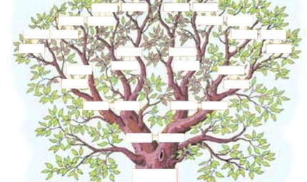 L'arbre généalogique : exercice