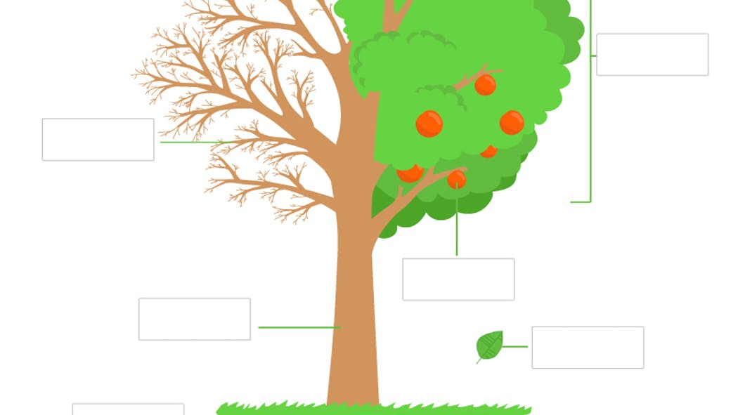 L'étude d'un arbre