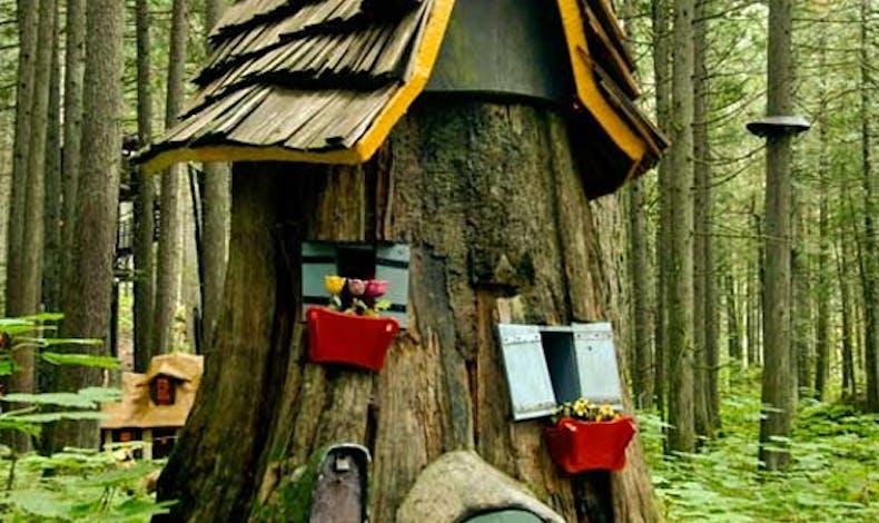 La cabane creusée dans l'arbre