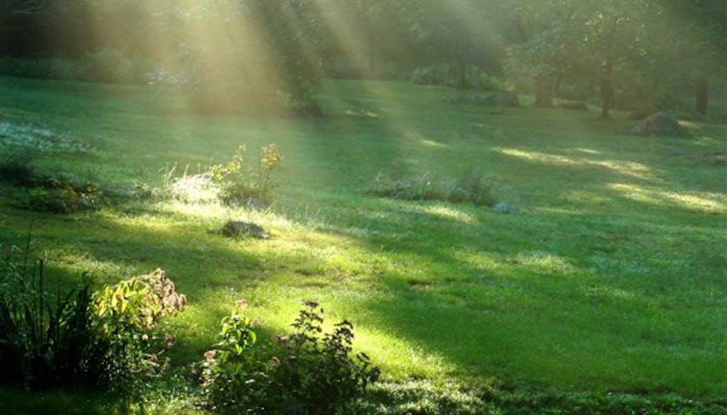 La clairière verte