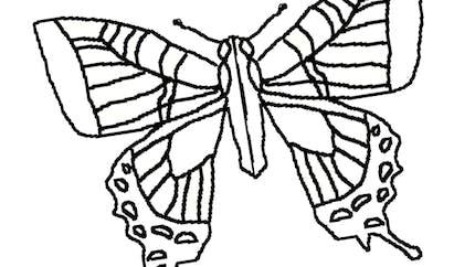 La symétrie du papillon : exercice niveau 1
