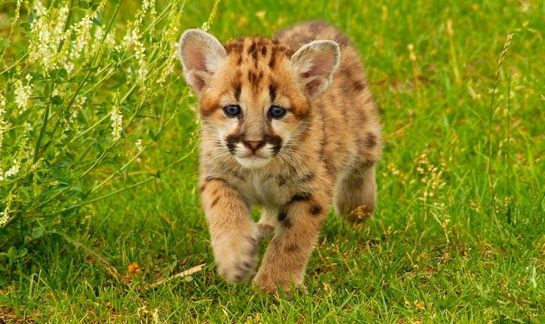 Le bébé guépard