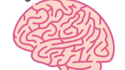 cerveau labyrinthe