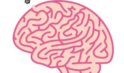 Le cerveau labyrinthe