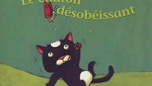 Le chaton désobéissant