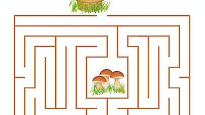 Le labyrinthe de la cueillette aux champignons