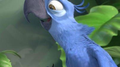 ara de spix bleu perroquet rio oiseau espèce       éteinte
