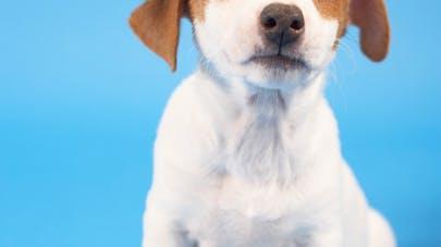 Le petit chien voyageur
