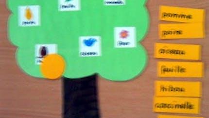 Lecture en jeu : l'arbre