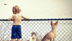 Les animaux de compagnie sont-ils indispensables ?
