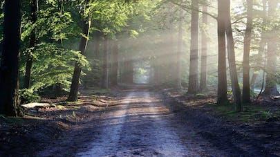 chemin forêt
