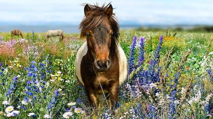 Les métiers autour du cheval