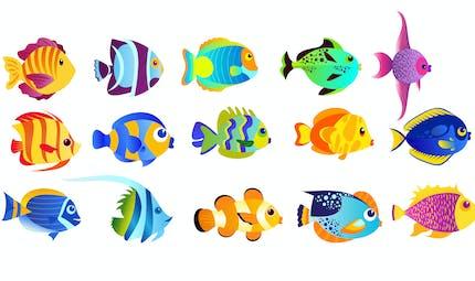 Les petits poissons dans l'eau