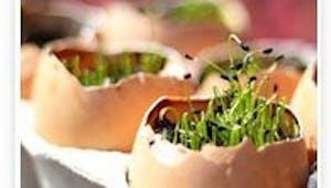 Mini jardin de pâques avec des coquilles d'oeufs