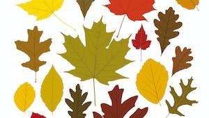 Modèle de feuille d'automne