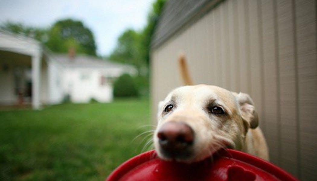 On joue au frisbee