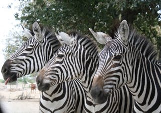 Photo Parcs zoologique African Safari
